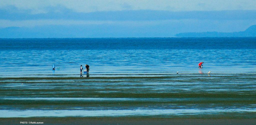 Birch Bay WA Beach Strolling