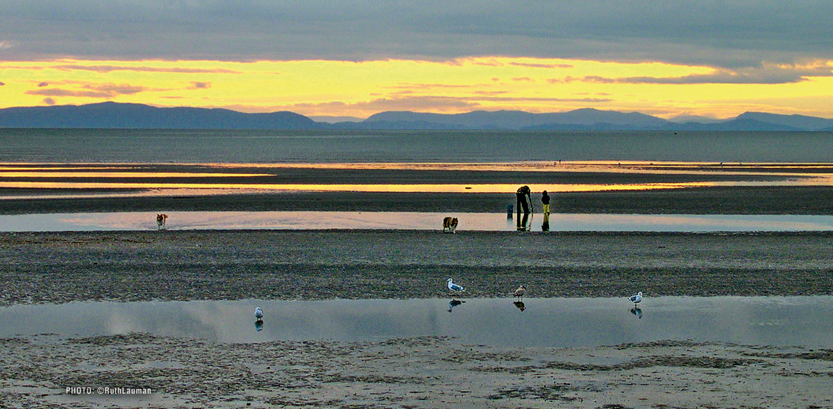 Birch Bay WA Clam Digging