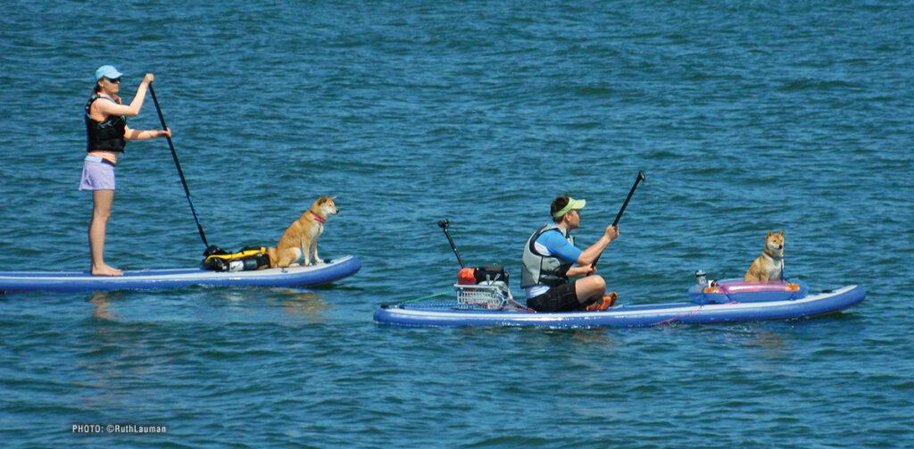 Paddleboarding Semiahmoo Bay